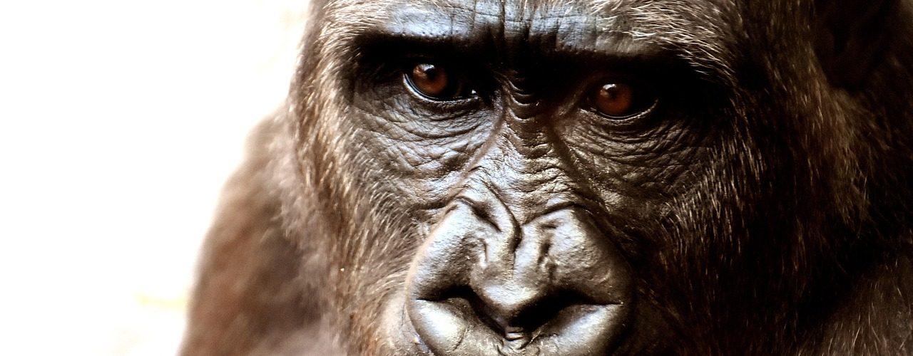 Radiokarbonový datovací kreacionismus