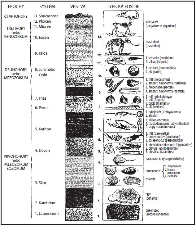 Geologický sloupec s nalezenými zkamenelinami.