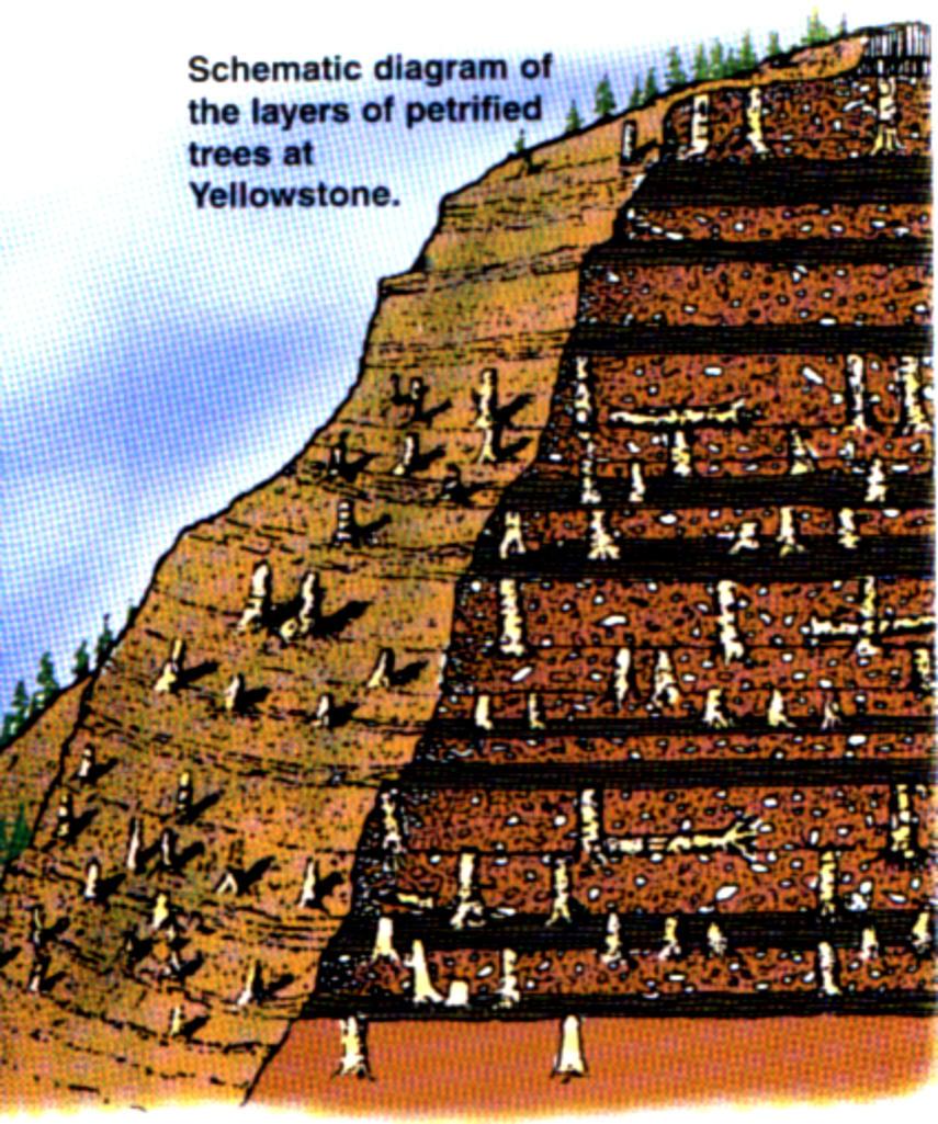 Schéma zkamenělých stromů v Yellowstone park